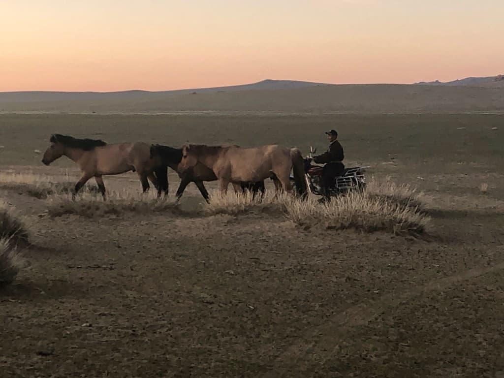 Nomad rounding horses