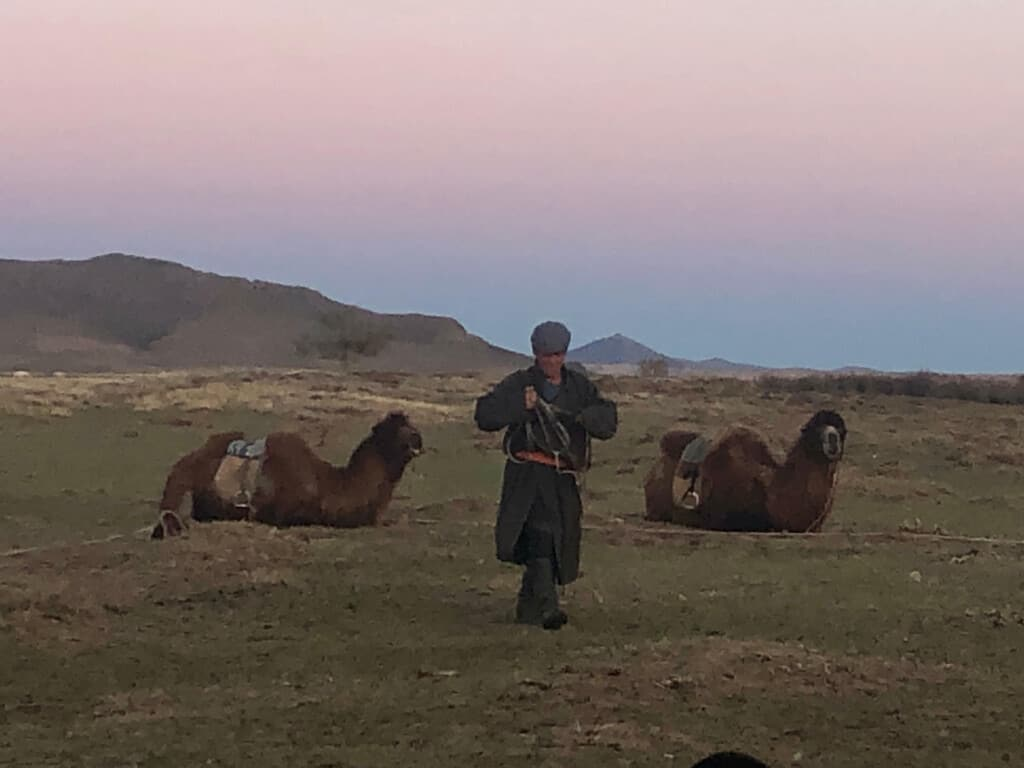 Mongolian Herder With His Camels