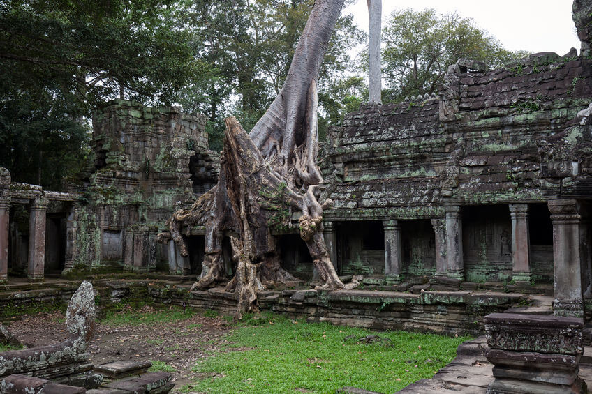 Angkor Wat With Trees Growing Out of It