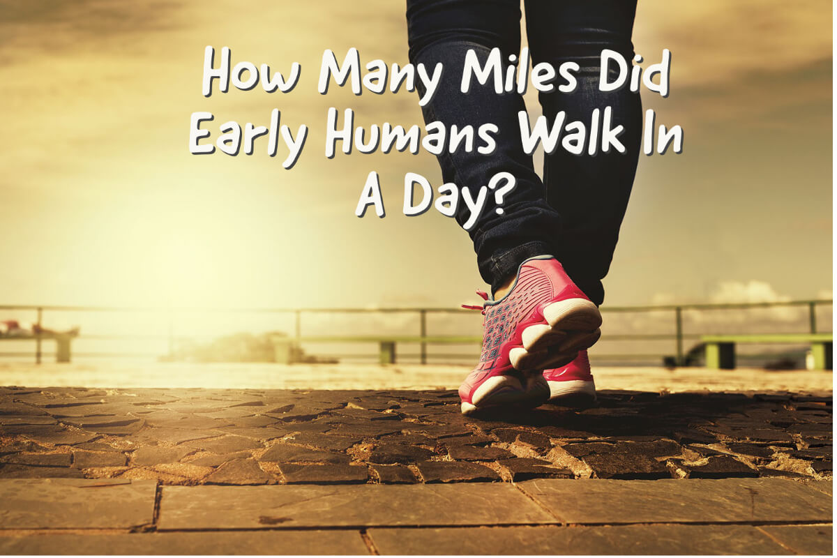 How Many Miles Did Early Humans Walk In A Day?